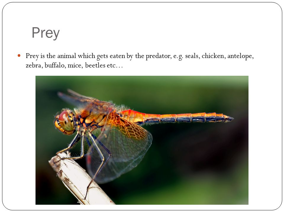 Predator & Prey Complete the predator and prey worksheet
