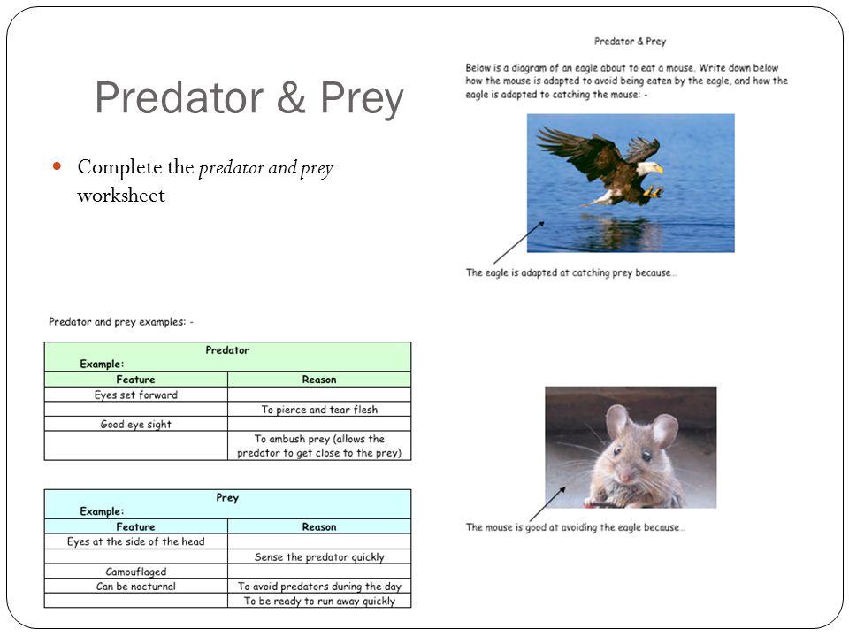Predator & Prey Complete the predator and prey worksheet