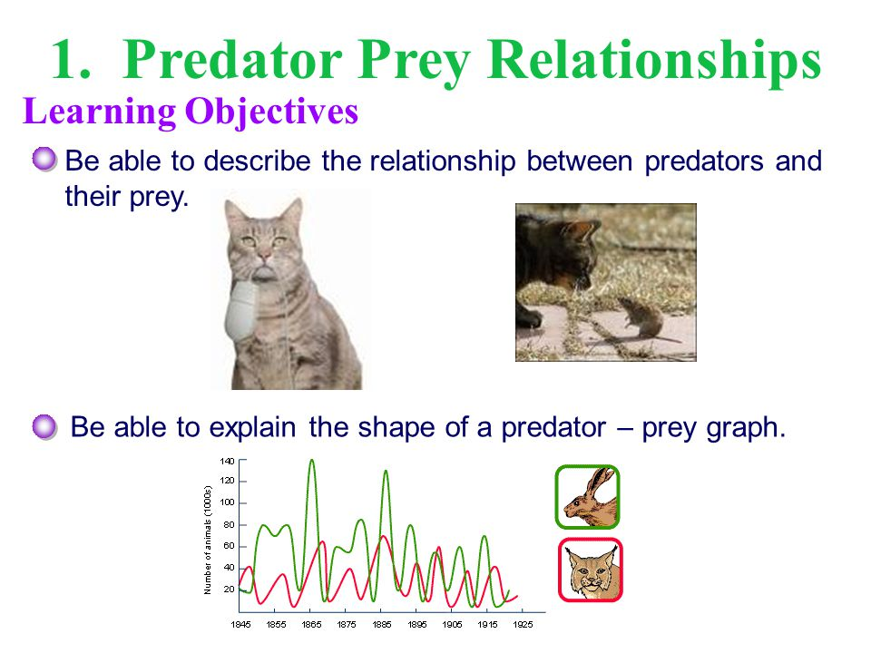 1. Predator Prey Relationships Be able to describe the relationship between predators and their prey. Be able to explain the shape of a predator – pre