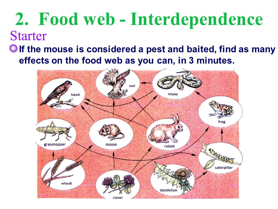 3.Food web – Interdependence … and that was a simplified food web.