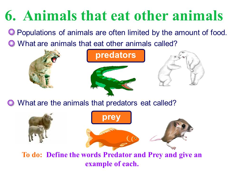Predators are adapted to catching and consuming their prey.