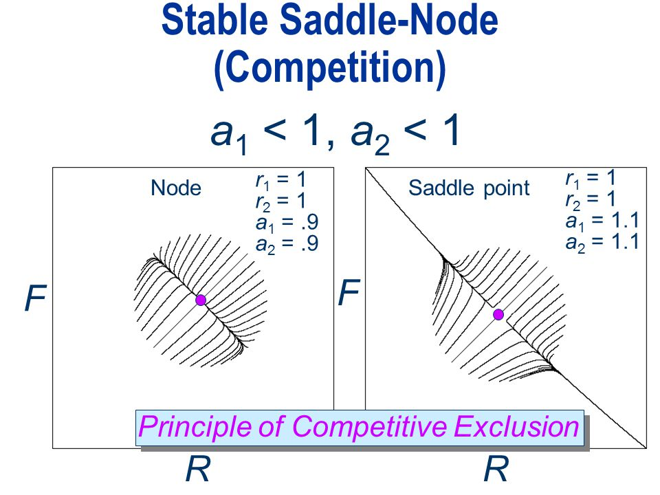 Principle of Competitive Exclusion Stable Saddle-Node (Competition) a 1 < 1, a 2 < 1 F RR r 1 = 1 r 2 = 1 a 1 =.9 a 2 =.9 r 1 = 1 r 2 = 1 a 1 = 1.1 a 2 = 1.1 F NodeSaddle point