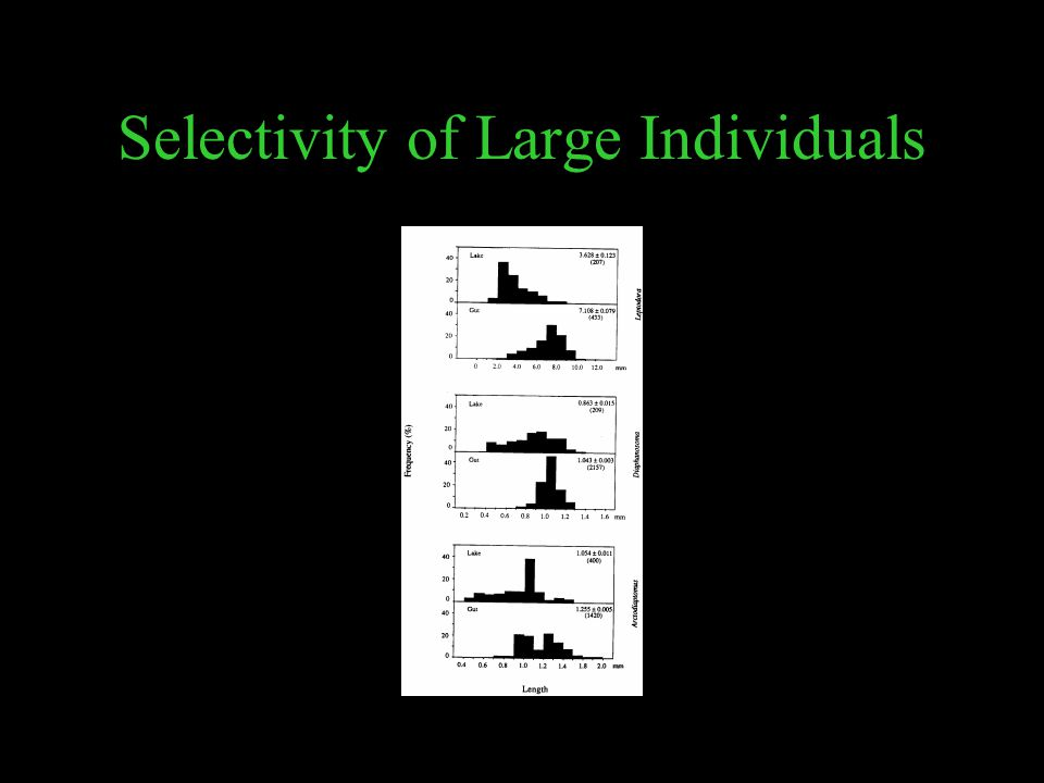 Selectivity of Large Individuals