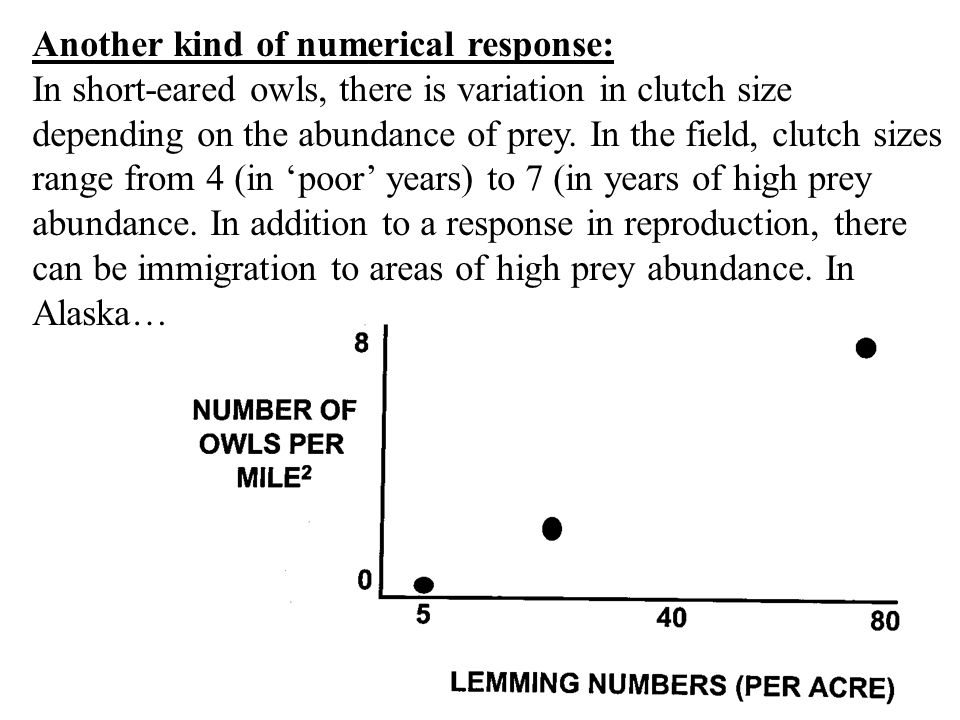 Another kind of numerical response: In short-eared owls, there is variation in clutch size depending on the abundance of prey.