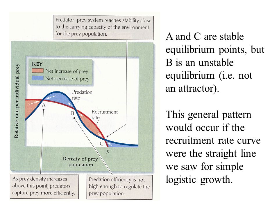 A and C are stable equilibrium points, but B is an unstable equilibrium (i.e. not an attractor). This general pattern would occur if the recruitment r