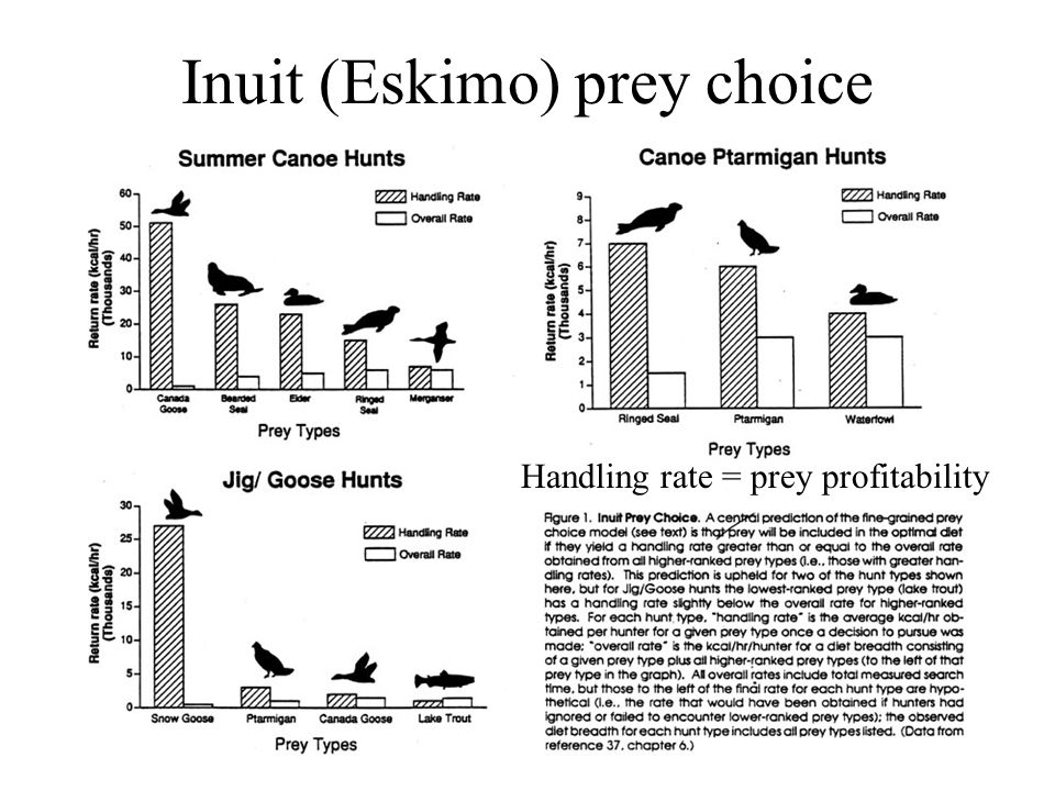 Inuit (Eskimo) prey choice Handling rate = prey profitability