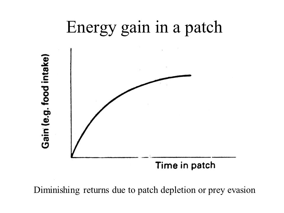 Energy gain in a patch Diminishing returns due to patch depletion or prey evasion