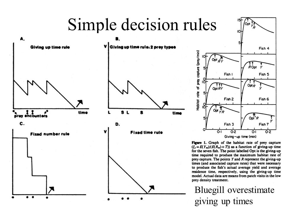 Simple decision rules Bluegill overestimate giving up times