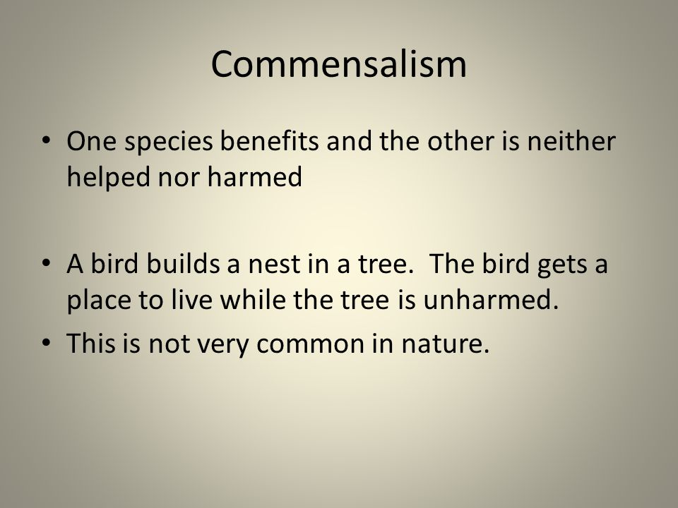 Commensalism One species benefits and the other is neither helped nor harmed A bird builds a nest in a tree. The bird gets a place to live while the t