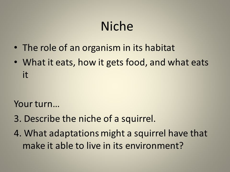 Niche The role of an organism in its habitat What it eats, how it gets food, and what eats it Your turn… 3. Describe the niche of a squirrel. 4. What