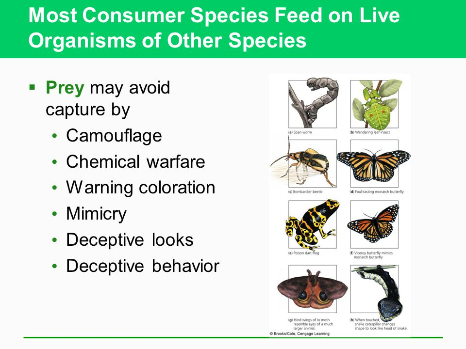 Most Consumer Species Feed on Live Organisms of Other Species  Prey may avoid capture by Camouflage Chemical warfare Warning coloration Mimicry Deceptive looks Deceptive behavior