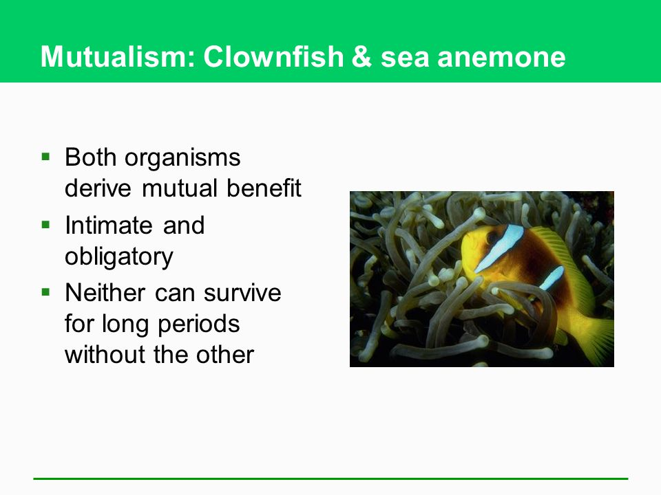 Mutualism: Clownfish & sea anemone  Both organisms derive mutual benefit  Intimate and obligatory  Neither can survive for long periods without the other