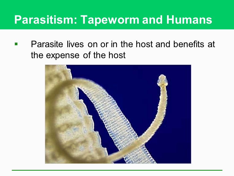Parasitism: Tapeworm and Humans  Parasite lives on or in the host and benefits at the expense of the host