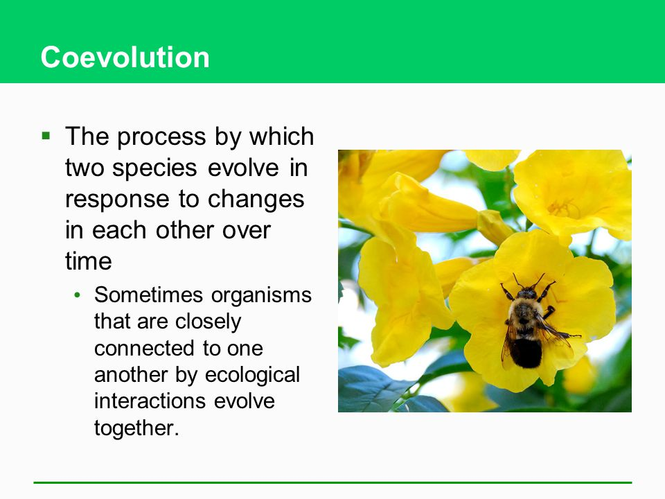 Coevolution  The process by which two species evolve in response to changes in each other over time Sometimes organisms that are closely connected to one another by ecological interactions evolve together.