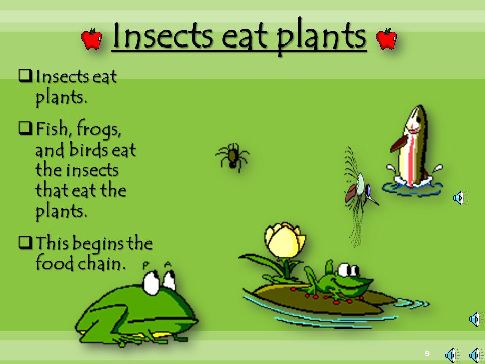 Omnivores  Omnivores will eat both plants and animals.