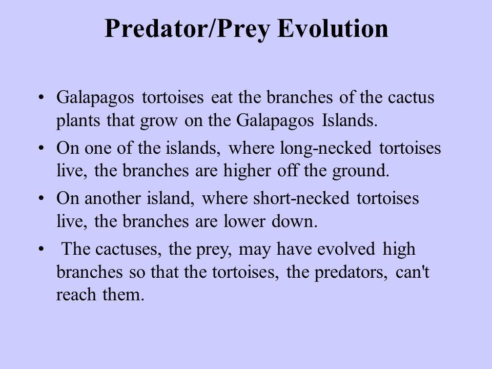 Predator/Prey Evolution Galapagos tortoises eat the branches of the cactus plants that grow on the Galapagos Islands. On one of the islands, where lon