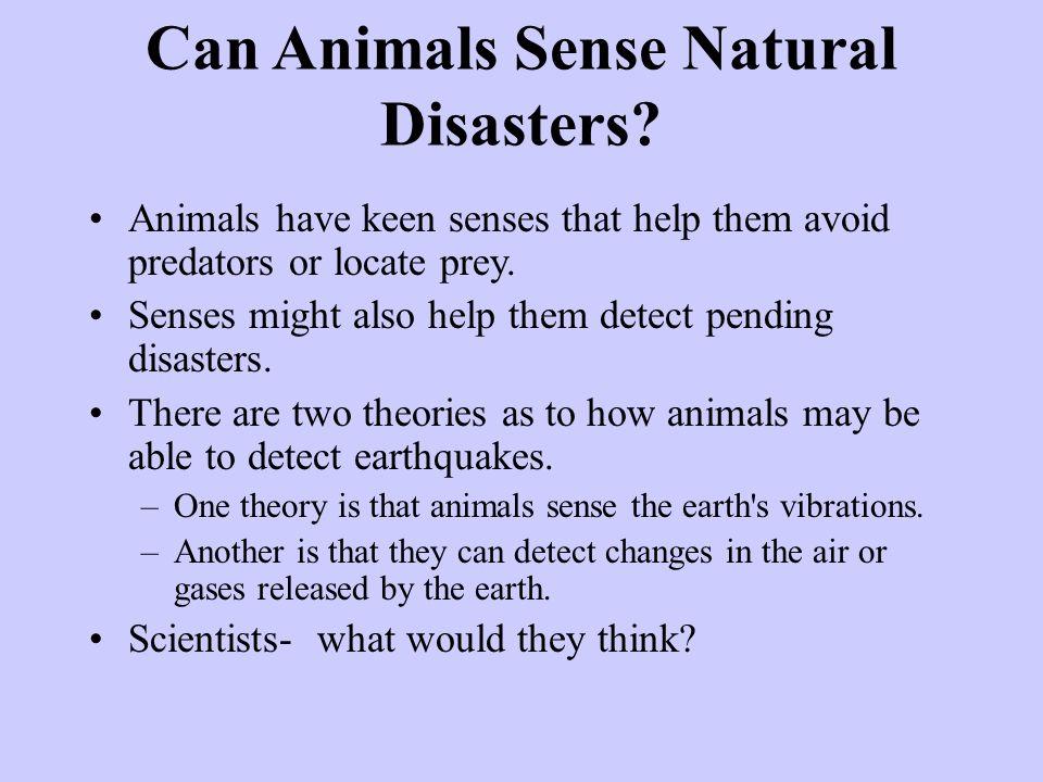 Can Animals Sense Natural Disasters.