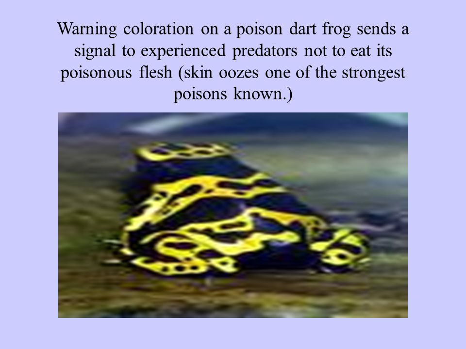 Warning coloration on a poison dart frog sends a signal to experienced predators not to eat its poisonous flesh (skin oozes one of the strongest poisons known.)