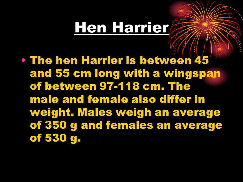 Hen Harrier The hen Harrier is between 45 and 55 cm long with a wingspan of between 97-118 cm. The male and female also differ in weight. Males weigh