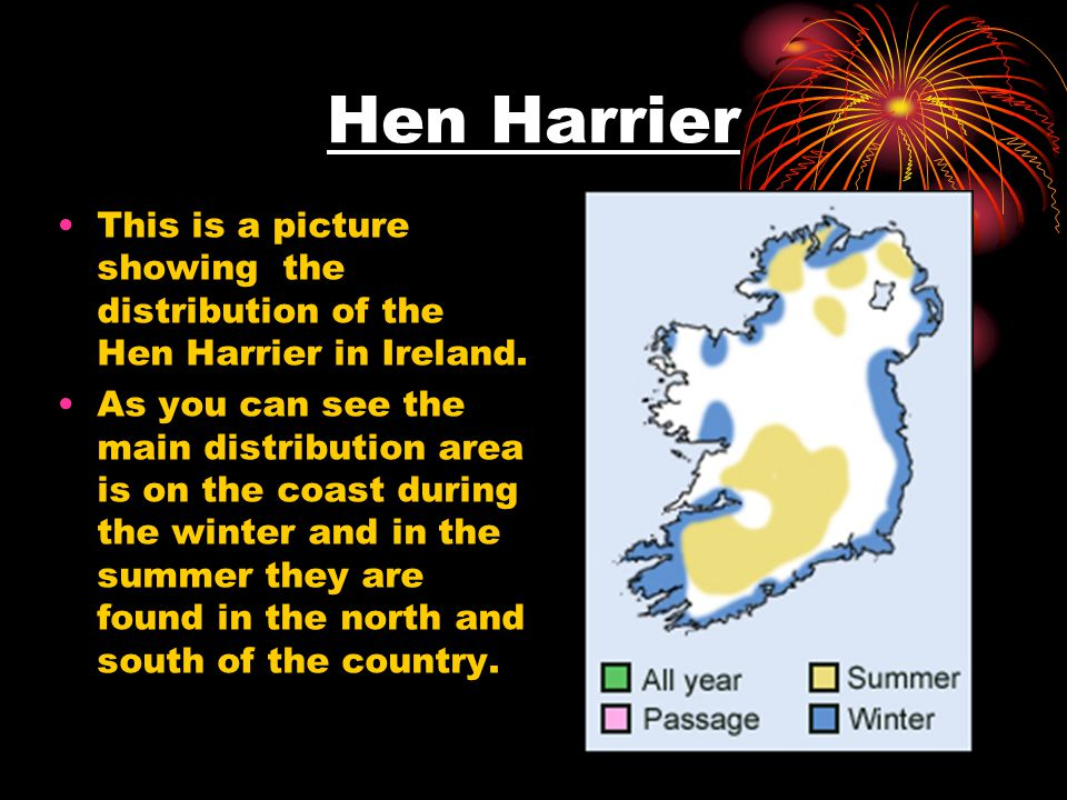 Hen Harrier This is a picture showing the distribution of the Hen Harrier in Ireland. As you can see the main distribution area is on the coast during