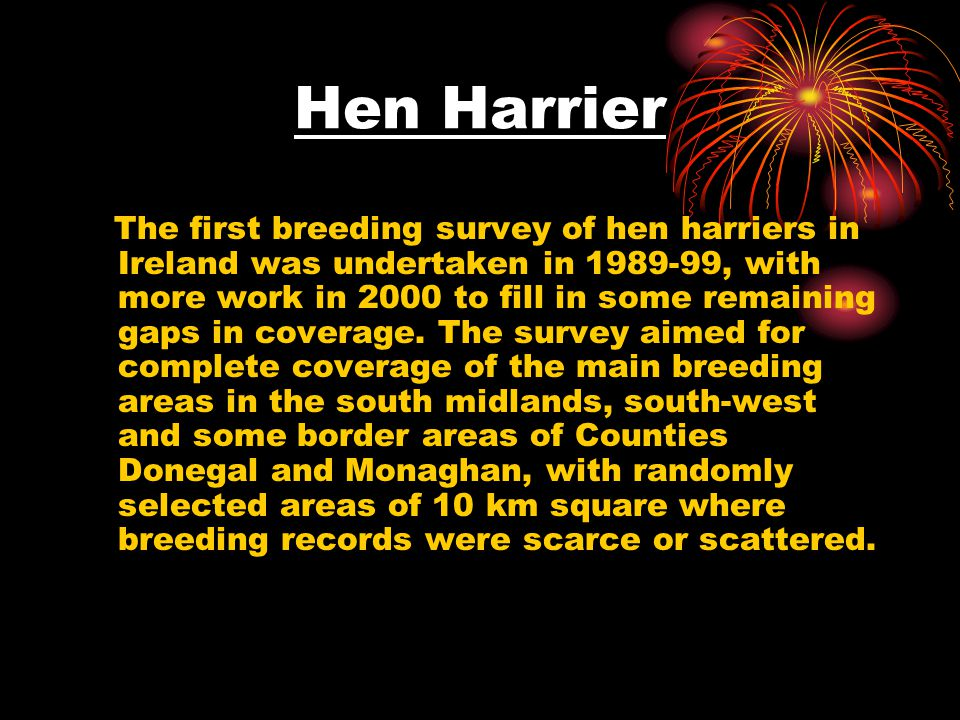 Breeding of Hen Harriers During summer months Hen Harriers breed in upland areas particularly in the south and west of Ireland ie., Cork, Limerick and Kerry.