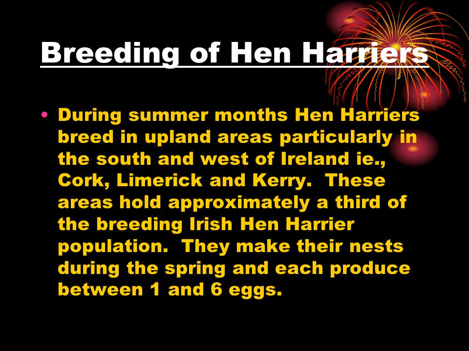 Breeding of Hen Harriers During summer months Hen Harriers breed in upland areas particularly in the south and west of Ireland ie., Cork, Limerick and