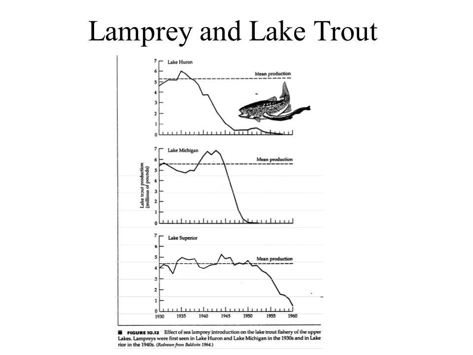 Lamprey and Lake Trout