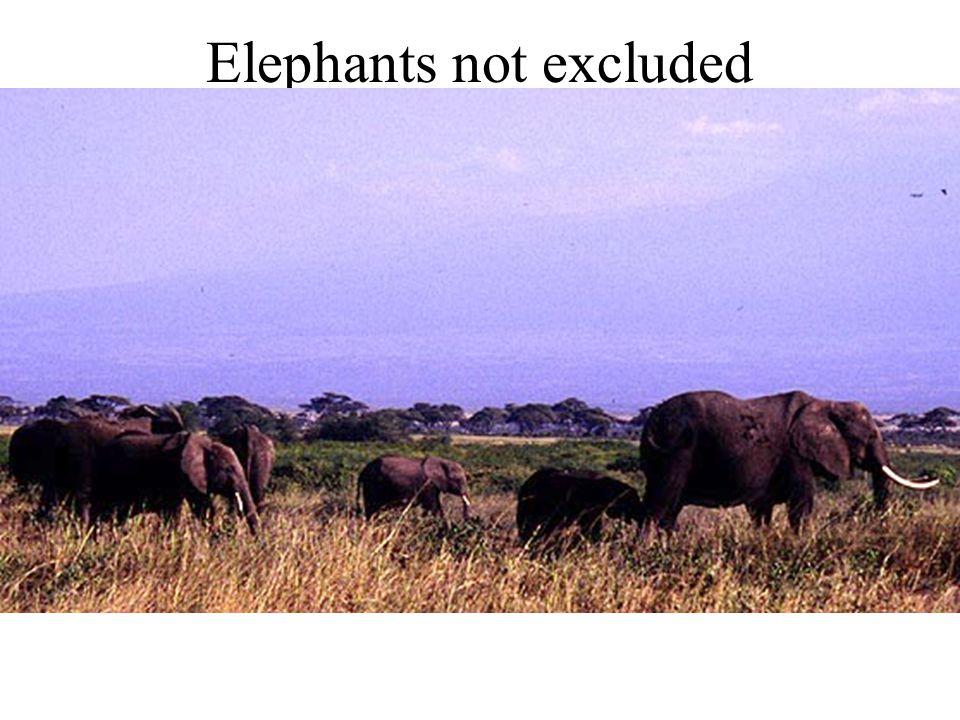 Elephants not excluded