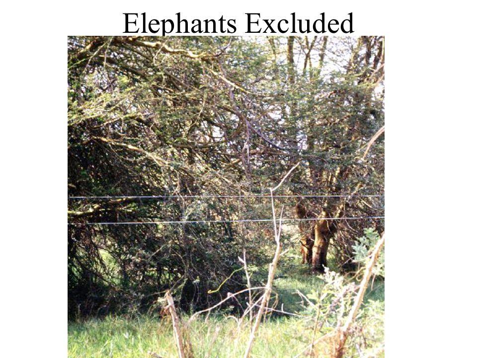 Elephants Excluded