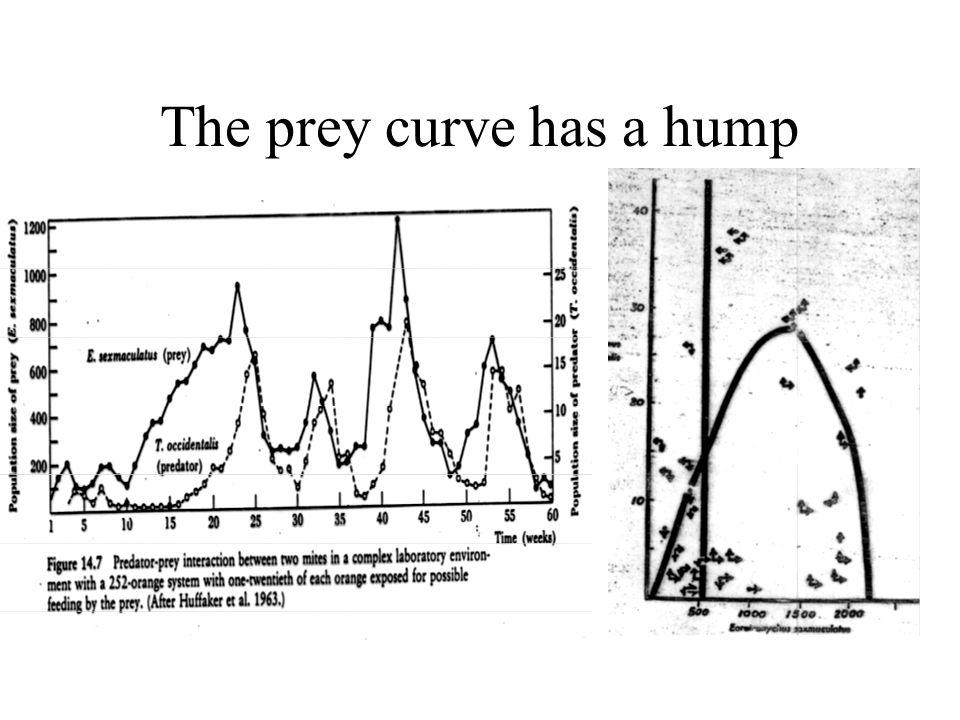 The prey curve has a hump