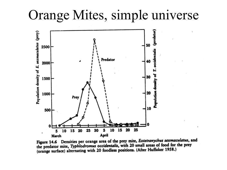 Orange Mites, simple universe