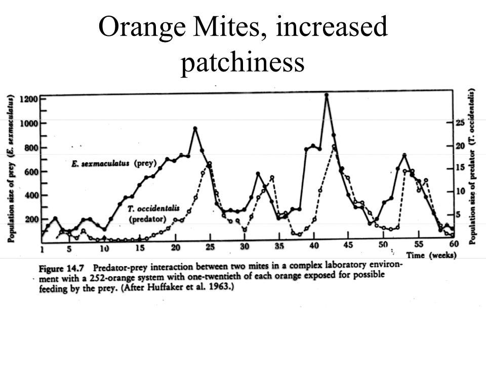 Orange Mites, increased patchiness