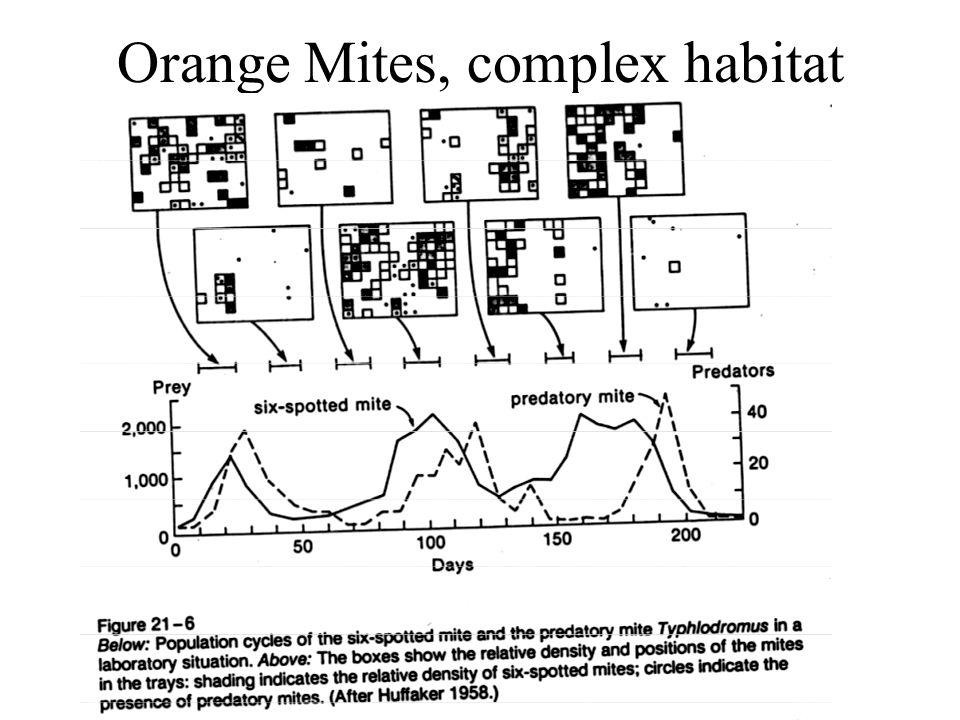 Orange Mites, complex habitat