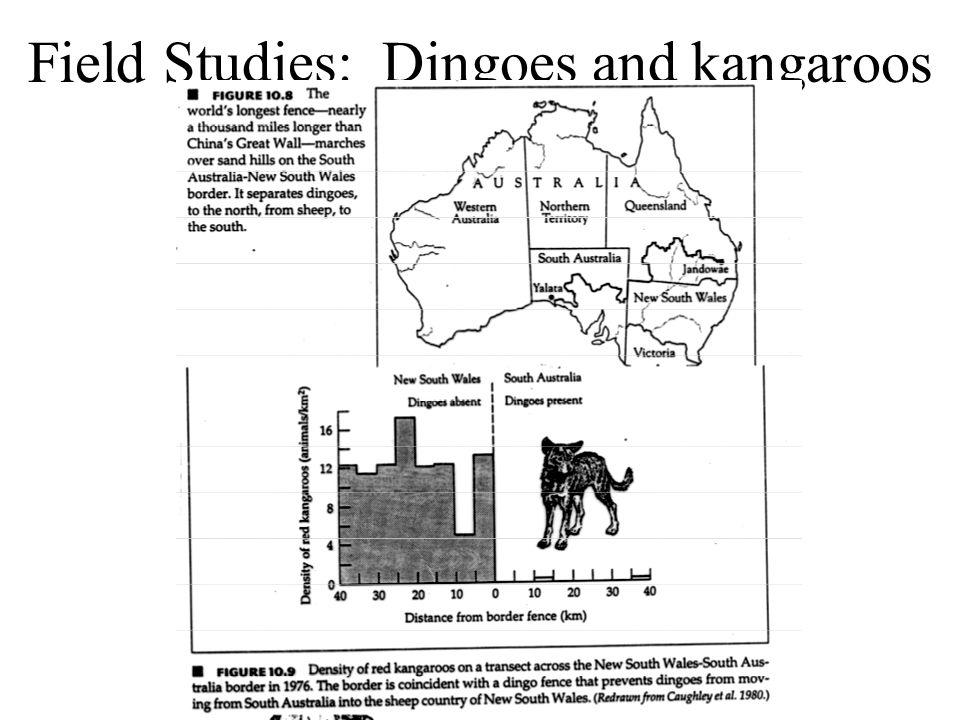 Field Studies: Dingoes and kangaroos