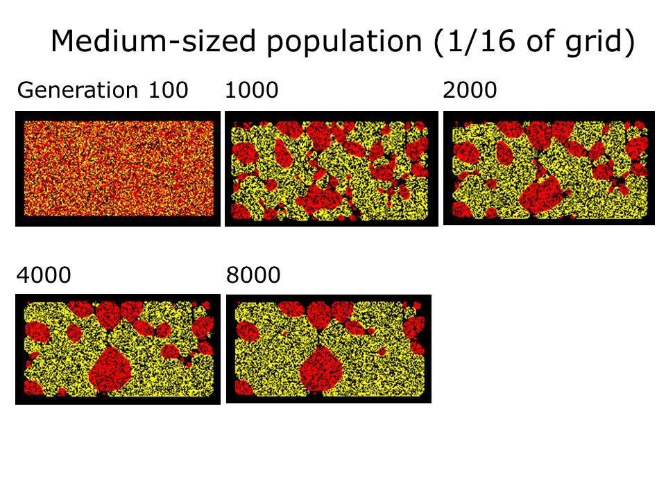 40 Variations of Initial Conditions Still using randomly distributed populations: Still using randomly distributed populations:  Medium-sized populat