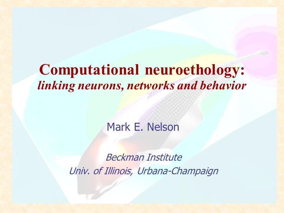 TALK OUTLINE Multiscale modeling in computational neuroethology Model system - weakly electric fish Modeling strategies Level I:Behavior Level II:Sensory physics Level III:Single neurons Level IV:Local networks Summary