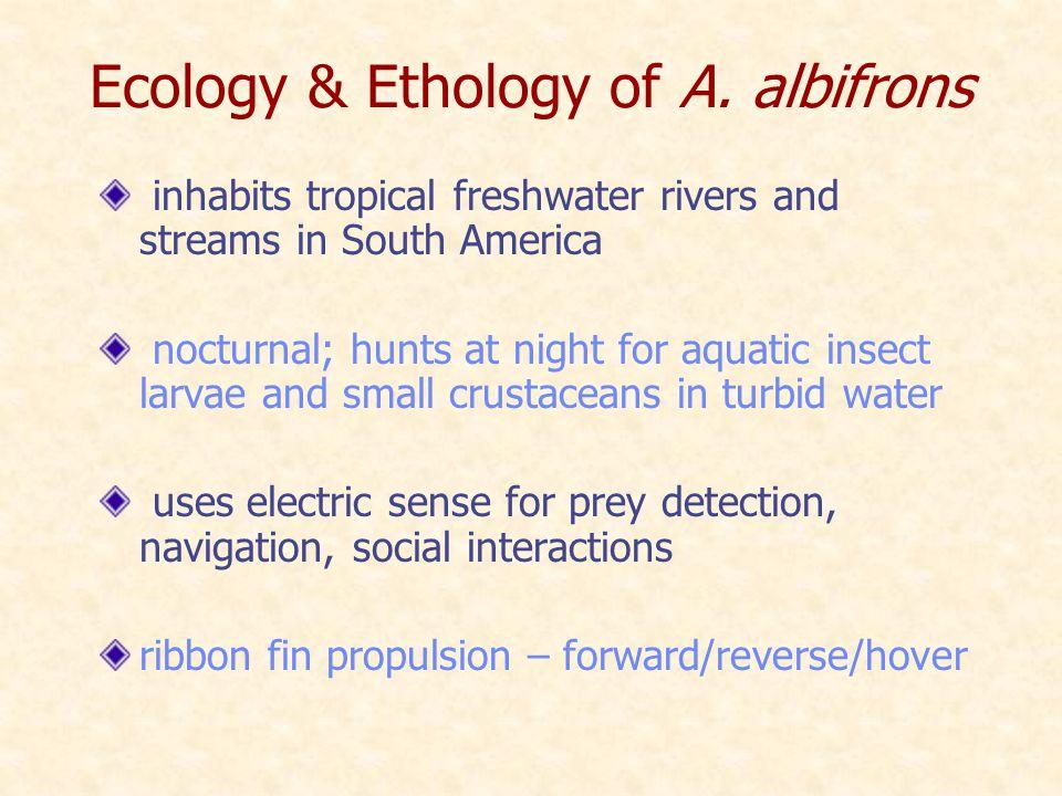 Ecology & Ethology of A.