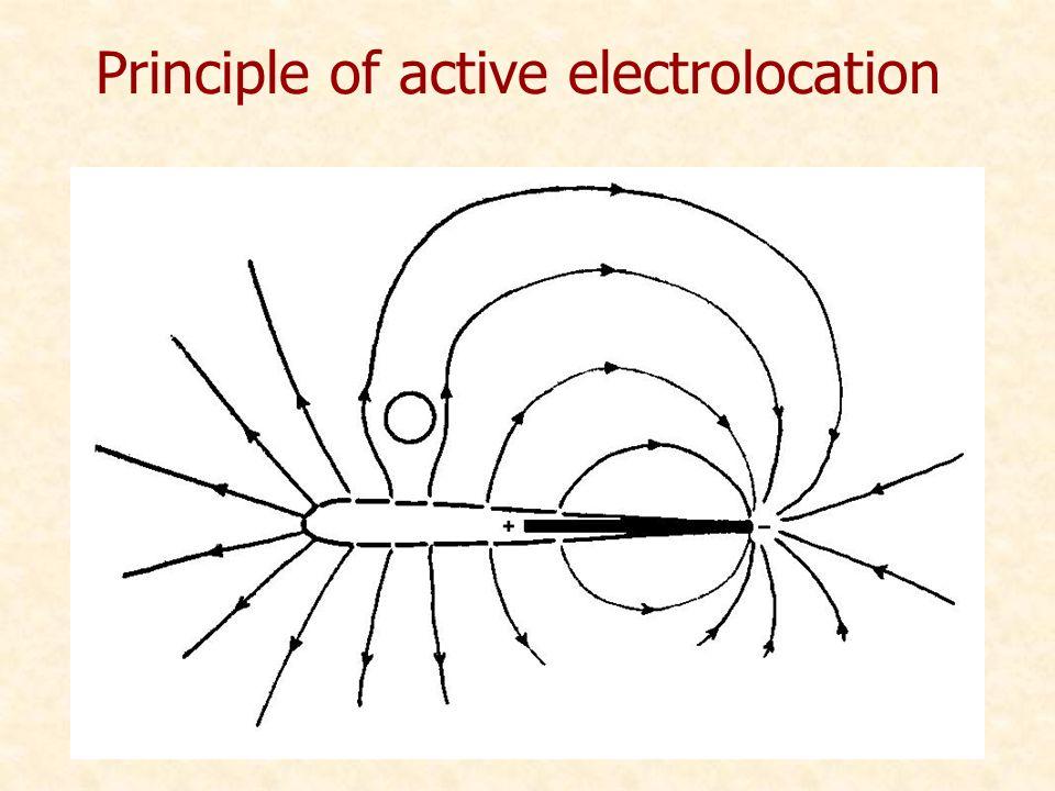 Principle of active electrolocation