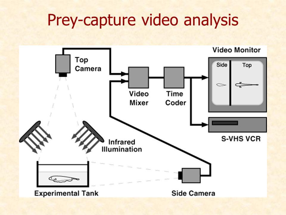 Prey-capture video analysis