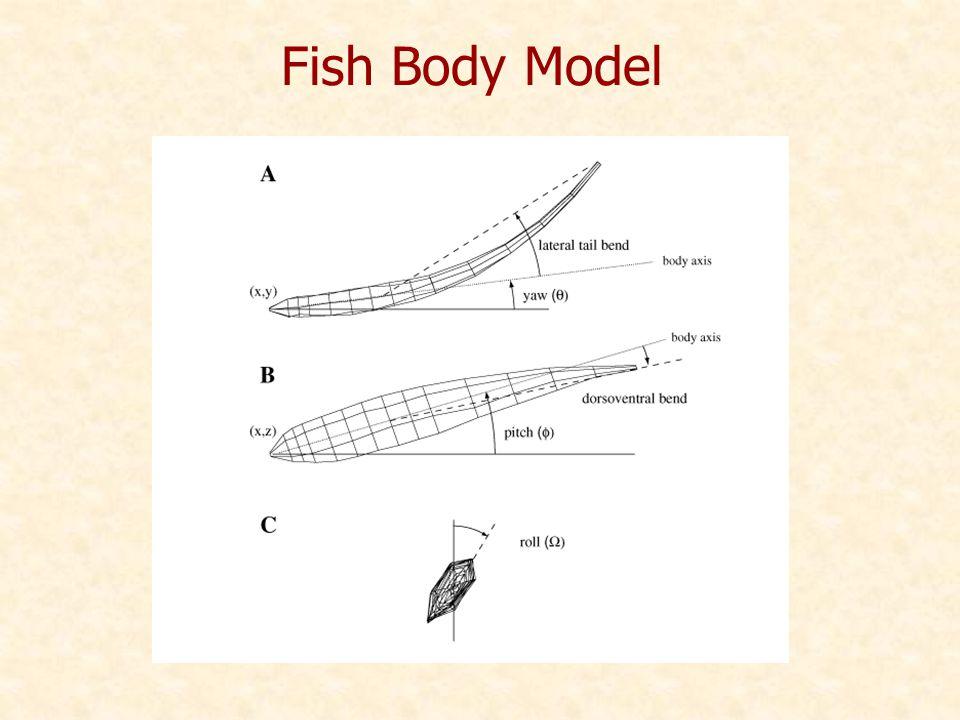 Fish Body Model