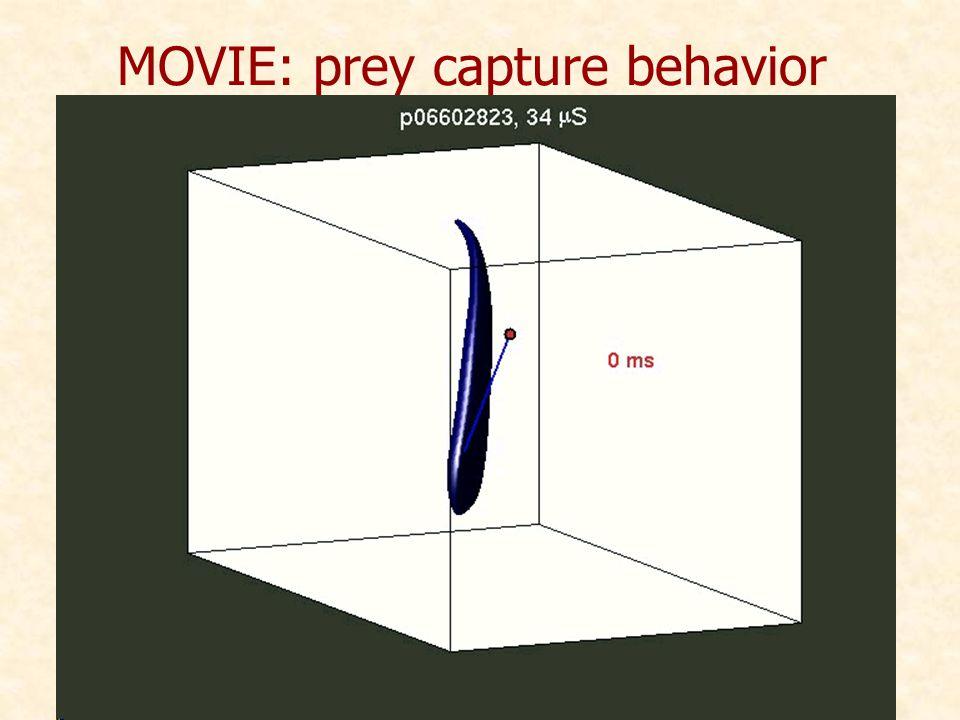 MOVIE: prey capture behavior