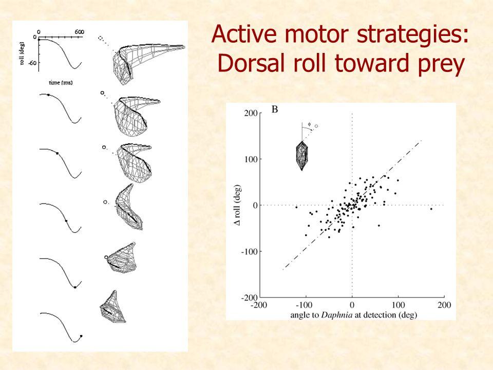 Active motor strategies: Dorsal roll toward prey