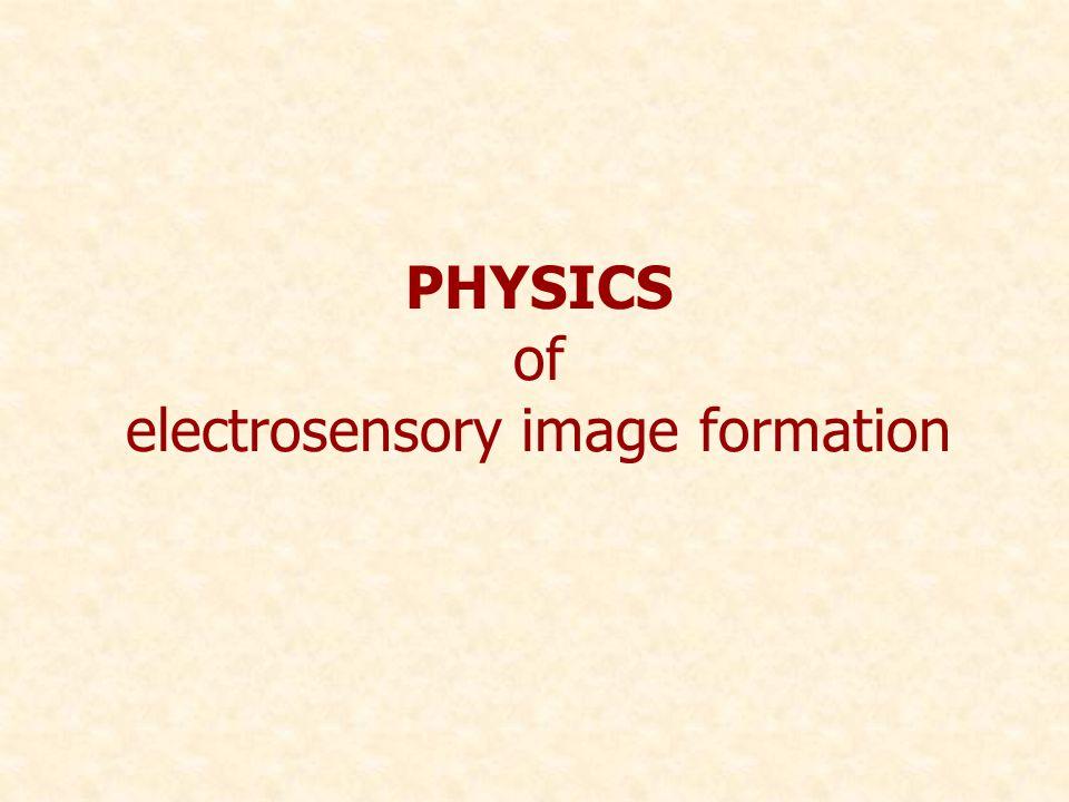 PHYSICS of electrosensory image formation