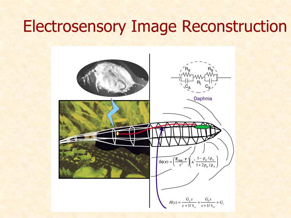 Electrosensory Image Reconstruction