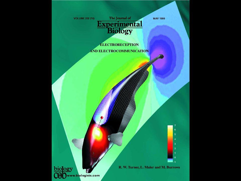 Electrosensory Images