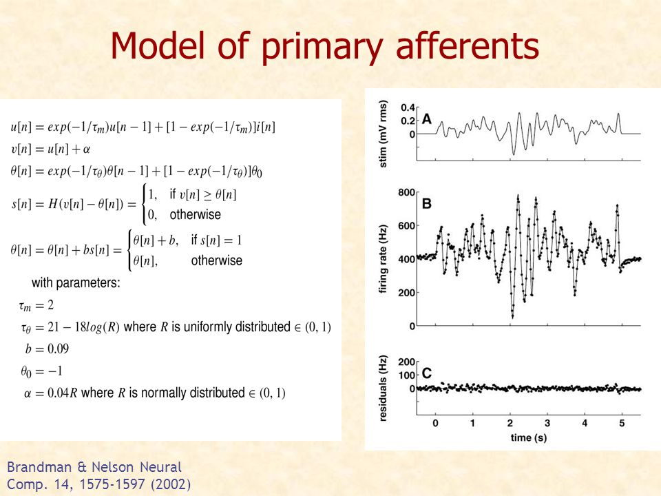 Model of primary afferents Brandman & Nelson Neural Comp. 14, 1575-1597 (2002)