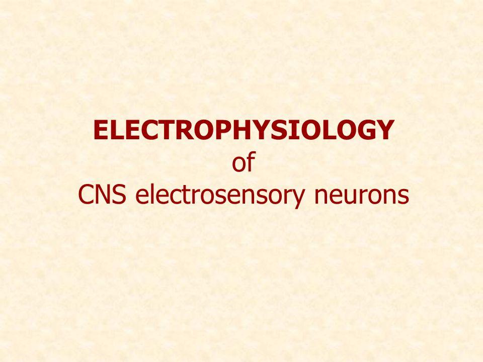 ELECTROPHYSIOLOGY of CNS electrosensory neurons