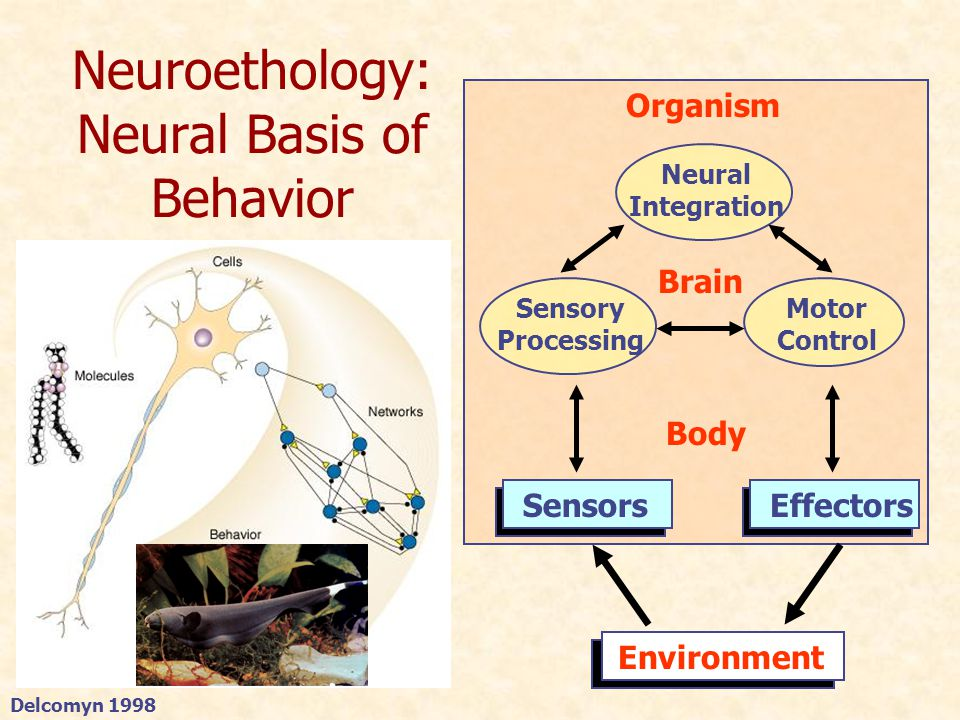Neuroethology of Electrolocation Big picture: What are the neural mechanisms and computational principles of active sensing.