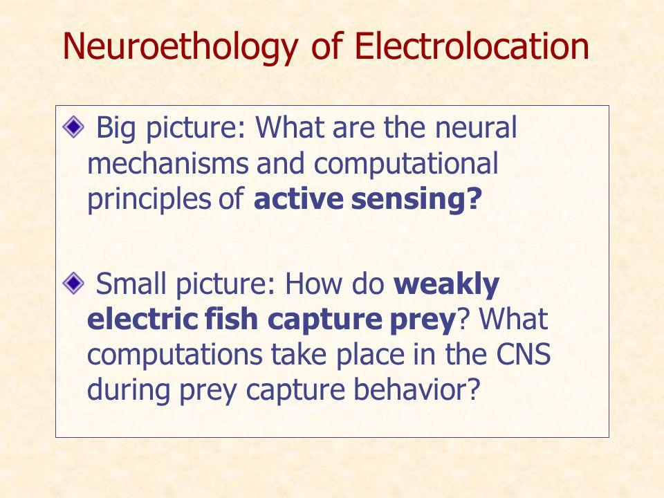 Prey capture behavior