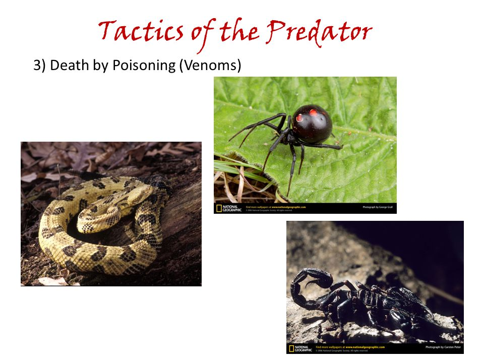 Tactics of the Predator 3) Death by Poisoning (Venoms)